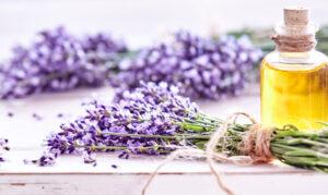 Αρωματικά φυτά - Αιθέρια έλαια