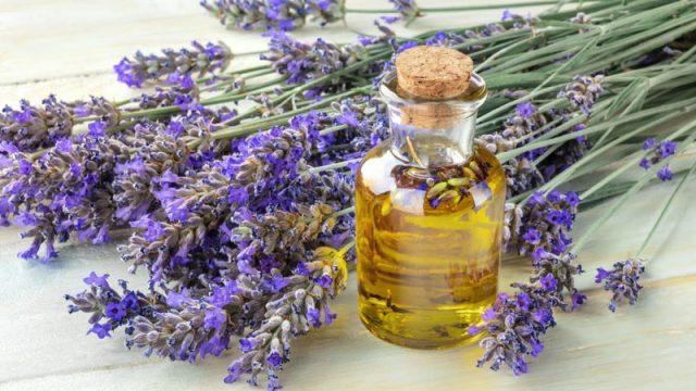 Wholesale of Lavender Essential oil